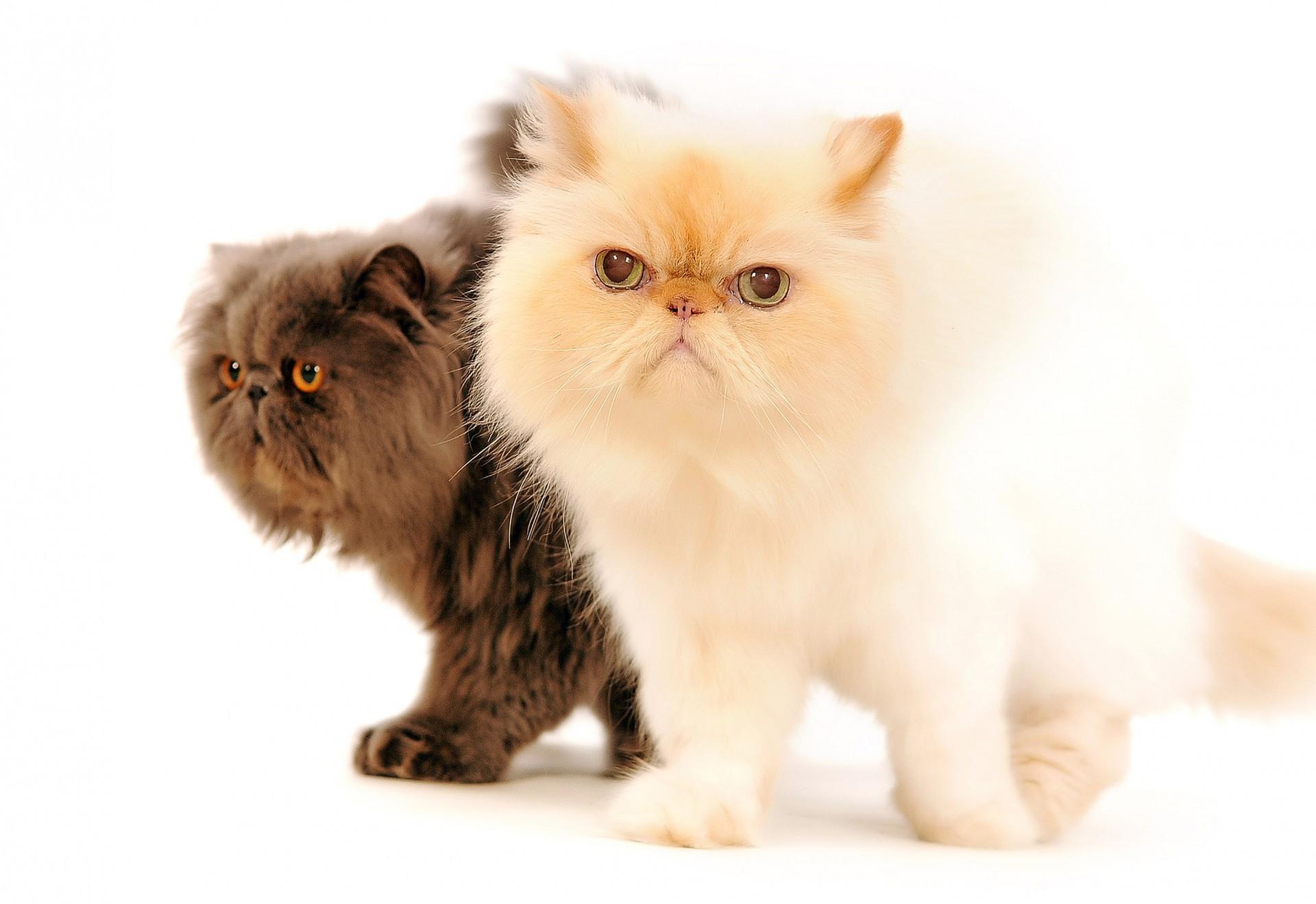 cat-portraits